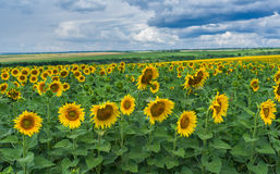 Typical central Ukrainian rural landscape Stock Image