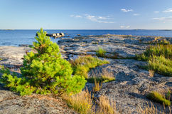Typical coast in Sweden Stock Image