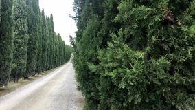 Typical country road in Tuscany lined with cypress trees. Typical country road in Tuscany, Italy lined with cypress trees. Panning over trees and rural landscape stock video footage