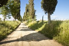 Typical country Tuscany road Stock Image
