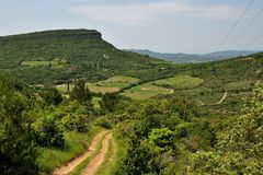 Typical countryside of Languedoc with vines Royalty Free Stock Images