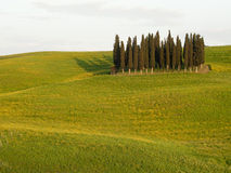 Typical countryside of Tuscany  in Italy Stock Photography