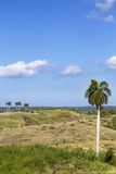 Typical cuban landscape Royalty Free Stock Photos