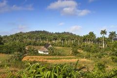 Typical cuban landscape Stock Photos