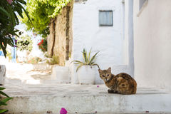 Typical on the cyclades: wild cats on the road. Stock Images