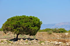 Typical cyprus landscape Royalty Free Stock Images