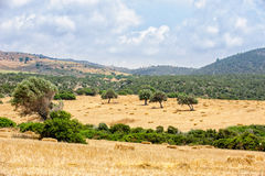 Typical cyprus rural landscape Royalty Free Stock Photo