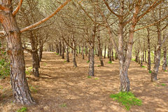 Typical dry Mediterranean forest. In sunny spring day Stock Photo
