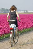 Typical dutch. Biking along the tulip fields Stock Photography