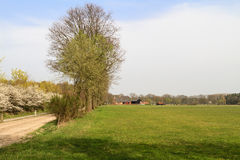 Typical Dutch countryside Stock Images