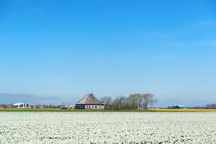 Typical Dutch farm house Royalty Free Stock Photography