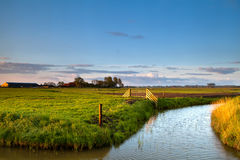 Typical dutch farmland with canals Royalty Free Stock Image