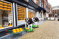 Typical dutch image of cow and cheese for sale Royalty Free Stock Image