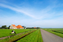 Typical dutch landscape. With cows farmland and a farm house stock photography