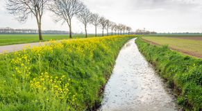Typical Dutch landscape at the beginning of the spring season. Royalty Free Stock Photo