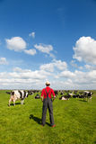 Typical Dutch landscape with farmer and cows Stock Images