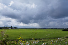 Typical Dutch landscape. A farmers landscape in the region West Friesland Stock Photo