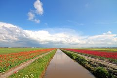 Typical dutch landscape in the Netherlands Royalty Free Stock Photo