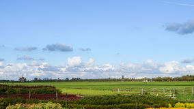 Typical Dutch Landscape with pastures, cows and a windmill Royalty Free Stock Photos