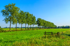 Typical Dutch Landscape Royalty Free Stock Image