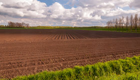Typical Dutch landscape in springtime Royalty Free Stock Photos
