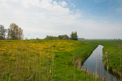 Typical Dutch landscape in springtime Royalty Free Stock Photo
