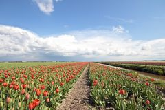 Typical dutch landscape in springtime Stock Images