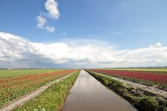 Typical dutch landscape in springtime Royalty Free Stock Images