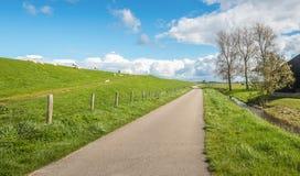 Typical Dutch landscape in springtime Stock Images