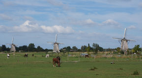 Typical Dutch landscape with windmills Stock Images