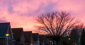 Typical dutch neighborhood with houses and a tree, pink nacreous clouds coloring the sky royalty free stock image