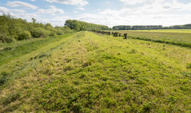 Typical Dutch polder landscape with a dike Royalty Free Stock Images
