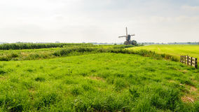 Typical Dutch polder landscape in the summer season Stock Image