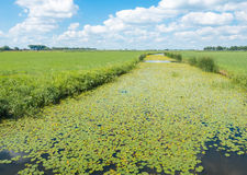 Typical Dutch polder landscape in summertime Stock Photos