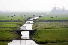 Typical Dutch polder landscape stock photo