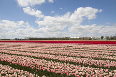 Typical Dutch Spring image Royalty Free Stock Images