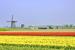 Typical dutch: Windmill tulipfields in Netherlands Royalty Free Stock Photo