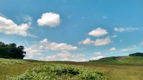 Typical english landscape. Green meadow with ferns stock photography