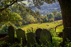 Typical english rolling countryside scene with sheep in field and ancient gravestones. In foreground royalty free stock photo