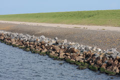 Typical example of a Dutch dike Stock Photography