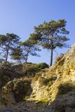 Typical exposed sedimentary sand stone cliff face on the Praia da Oura beach in Albuferia with Pine trees at the top. Typical exposed sedimentary sand stone Stock Images