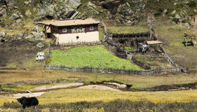 Typical farm of Kham, Tibet. Farm with typical architecture of Kham, orchard, paddock and yak Stock Images