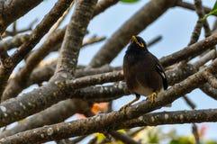 Typical Fijian bird in Mana Island, Fiji Stock Photo