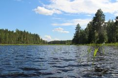 Typical Finnish Nature Fir Woods Near Lake Stock Image