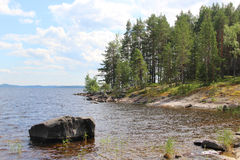 Typical Finnish nature fir woods near lake Royalty Free Stock Photography