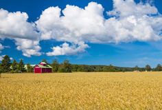 Typical Finnish summer landscape Stock Photos