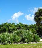 Typical Florida Foliage Stock Images