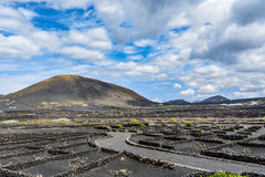 Typical grape cultivation in La Geria area on Lanzarote island royalty free stock images