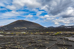 Typical grape cultivation in La Geria area on Lanzarote island royalty free stock photography