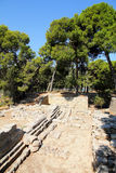 Typical Greek ruins and olive trees Royalty Free Stock Photography